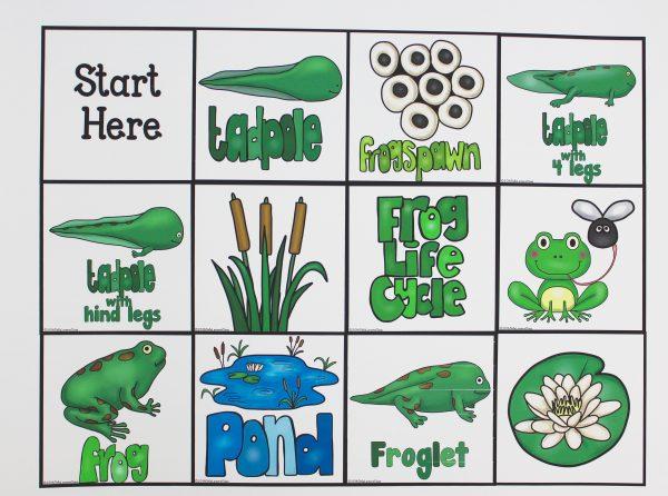 Bee Bot Frog Life Cycle